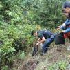 """景东团县委组织开展五四""""保护生态 爱护环境 志愿行动"""""""