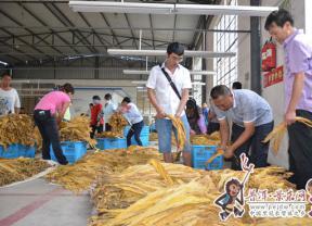 景东县2016年烤烟开磅收购