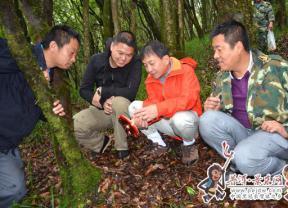 浙大专家团队践行科技产业扶贫 实力助推景东县野生菌资源开发