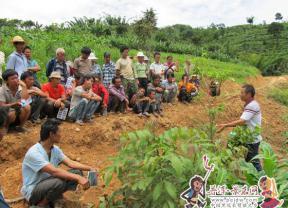 景东林业技术推广成效显著