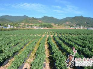 为农坚守 助力脱贫——景东农商行支持乡村振兴战略侧记