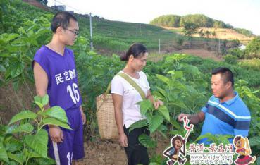 【田野风采】胜岩村:培植绿色产业激活脱贫动能