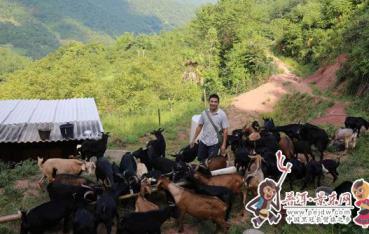 【脱贫攻坚进行时】陈华:养羊奔致富路