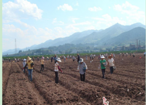 景东国土整治帮助农民致富奔小康