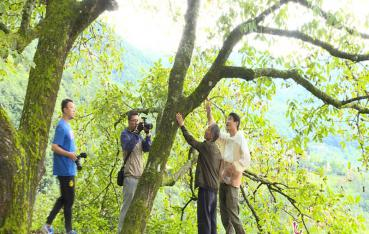 央视栏目《共同的家园》摄制组走进景东黄草岭